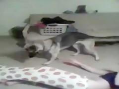 webcam dog zombeh