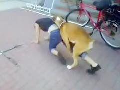 Animal Pass - Dog and Whitney