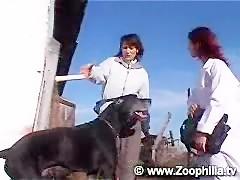 Rubia perra de su mascota - Videos de Zoofilia_(new)