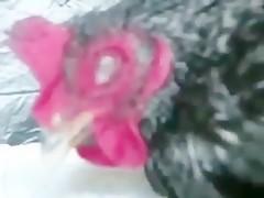 justine - Videos de Zoofilia