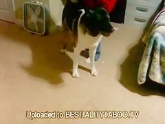Dogsex Amateur