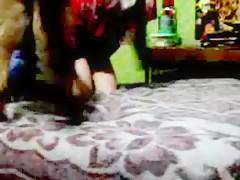 Horny Dalmatian