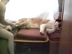 TacosandDrugs dog webcam lick CB