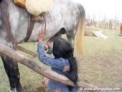 Horse Cum