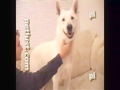 Horny Bulldog