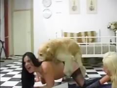 Teen follada y lamida por perro