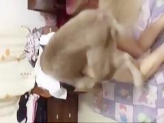 stuffing my bitch dog