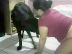 Dog licks girl