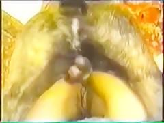 Pitbull Knot chunk 69