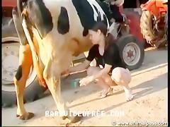 Cow Sex